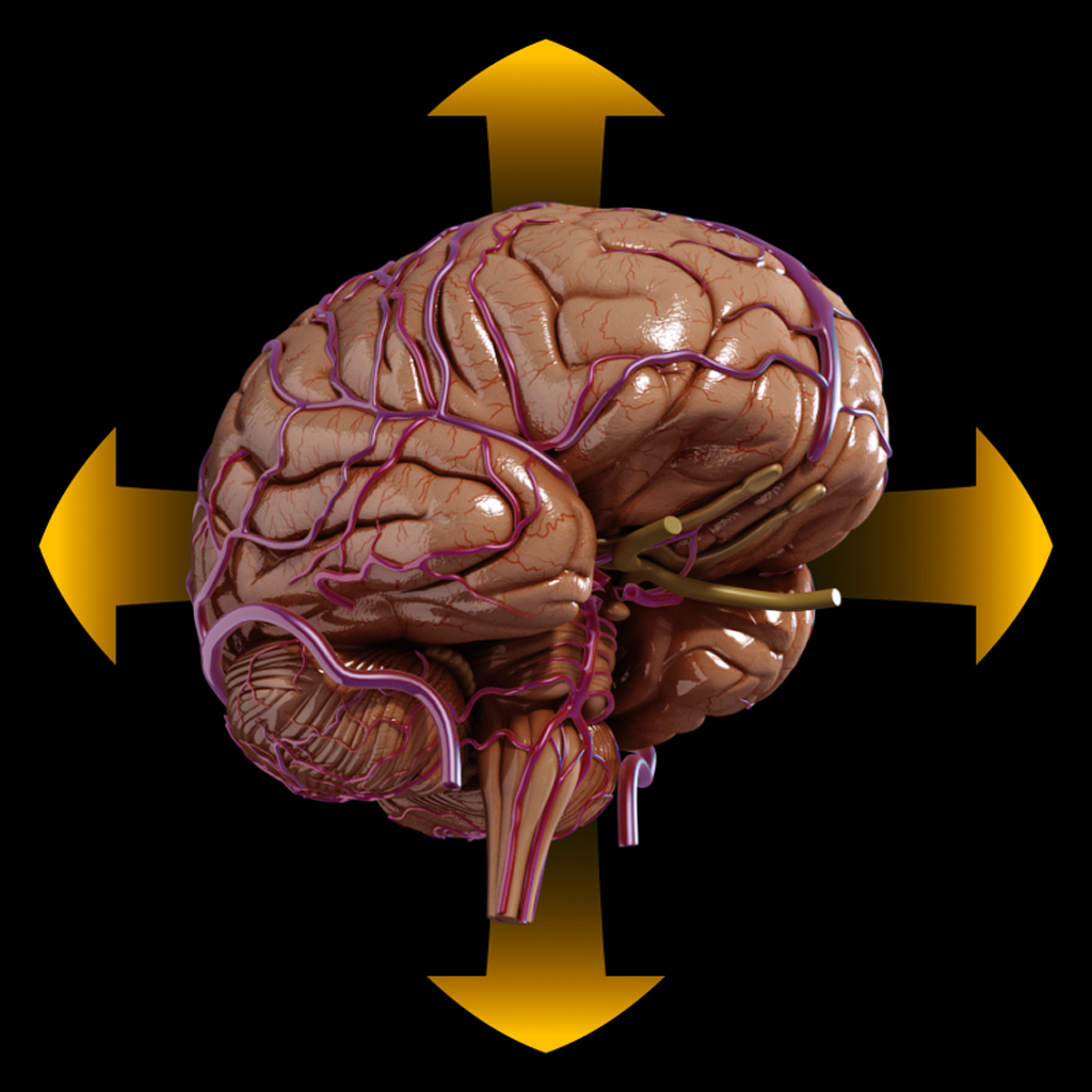 Brain Spinning 3d Anatomy By Catfish Animation Studio Srl